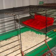 гамаки для грызунов