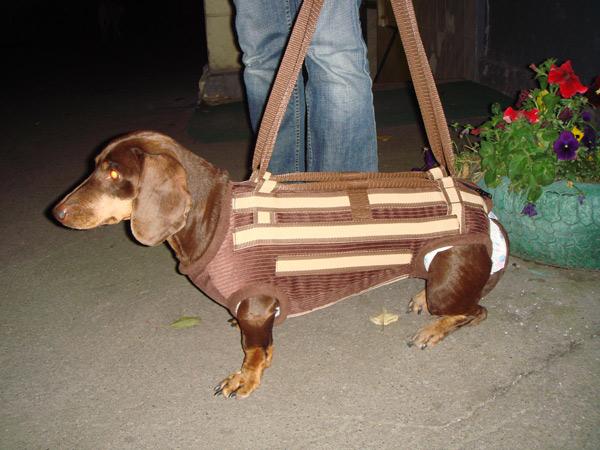 Корсет для собаки для позвоночника 24